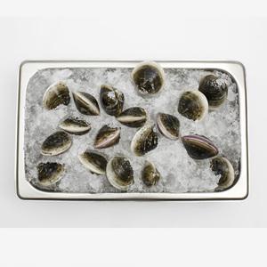 모시조개(200g)