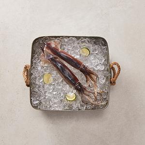 냉동 오징어(2마리)