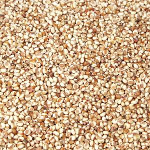 유기농 찰수수(100g)
