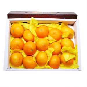 황금향(3kg/box)