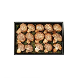 (78-06) 송화버섯 세트