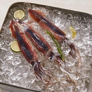 생물오징어(4마리)