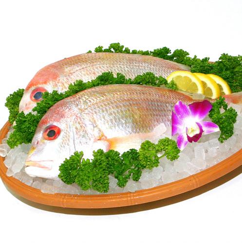 참돔(300g)