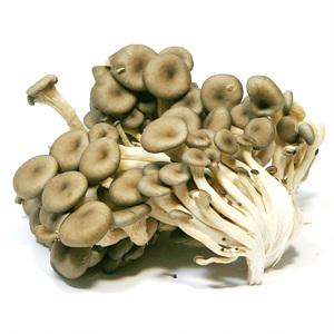 참타리버섯(200g/팩)