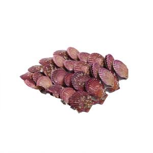 모시조개(500g)