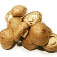 표고버섯(100g)